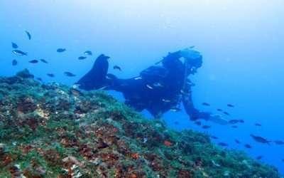 Immersione a AMP Portofino – 20 giugno 2019