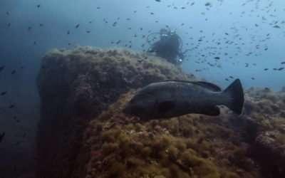 Immersione al Parco Marino di Portofino – 5 agosto 2017