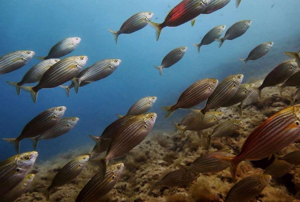 Corso biologia marina 2018