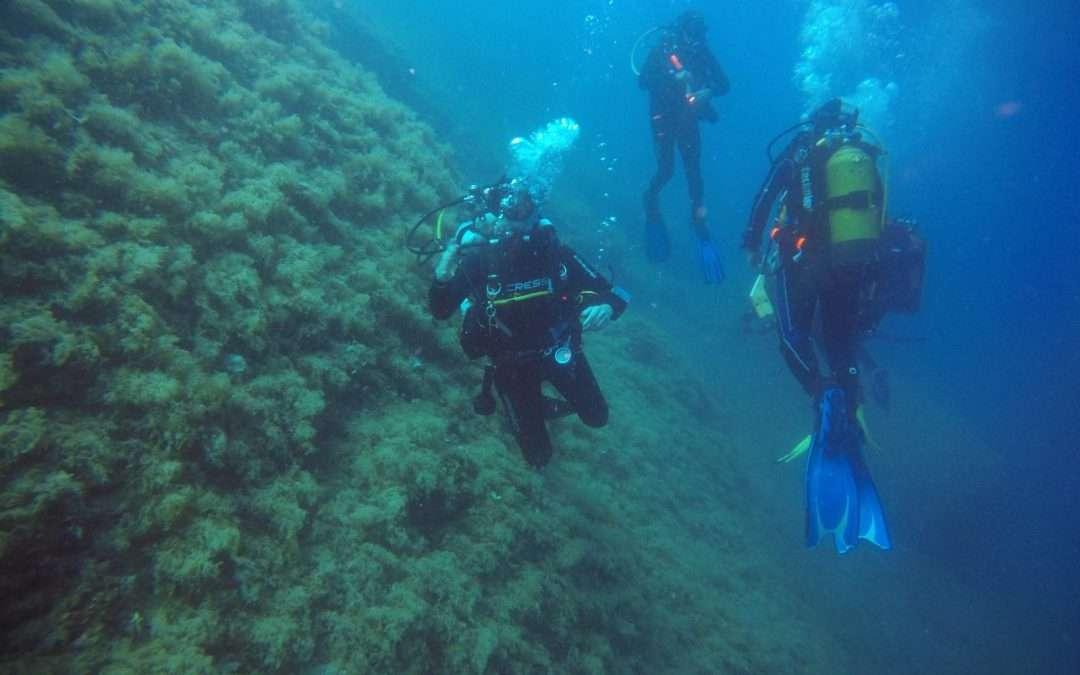 Fullday – doppia immersione a AMP Portofino –  03 Agosto 2019